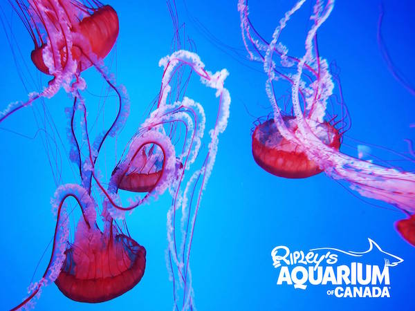 Ripley's Aquarium of Canadaの写真
